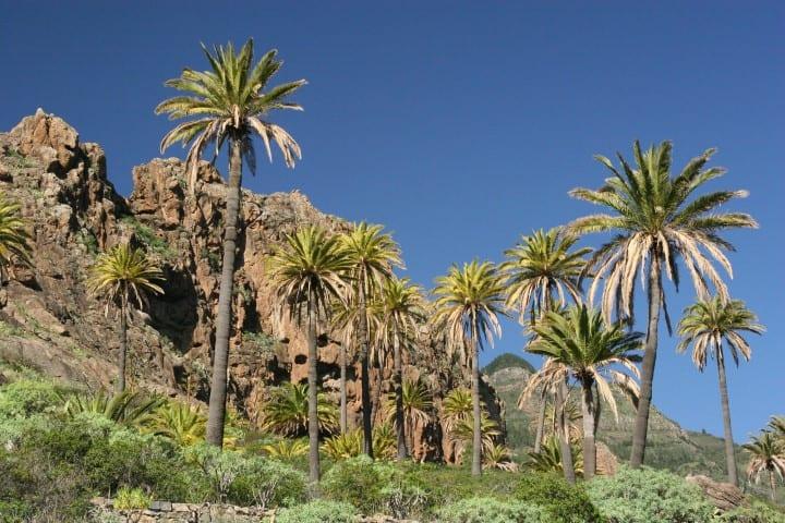 Wandern, wo es warm ist: Wanderurlaub unter Palmen