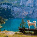 Nachhaltiger Urlaub mit Hund