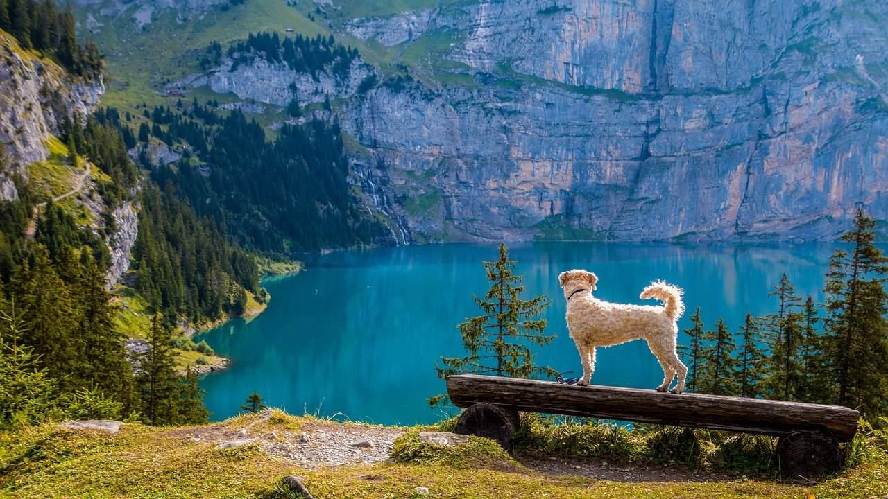 Hund nachhaltiger Urlaub
