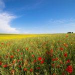 Nachhaltiger Sommerurlaub in Deutschland
